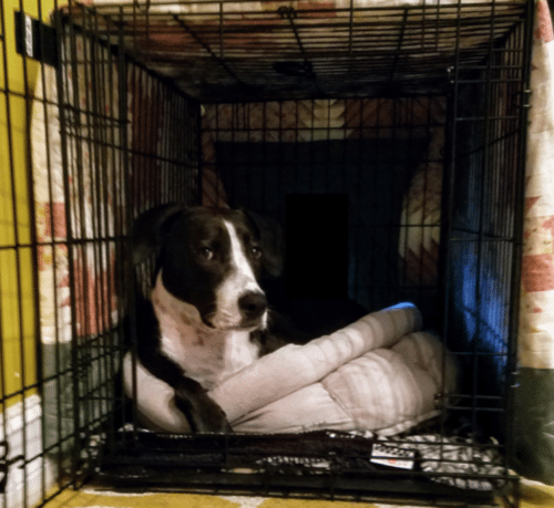 Benefits and Tips for Dog Crate Training